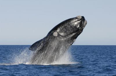 Full-Day Hermanus Whale Route Tour from Cape Town (Optional Whale Watching Boat)
