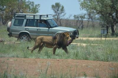 Lion and Safari Park Tour - From Johannesburg and Pretoria