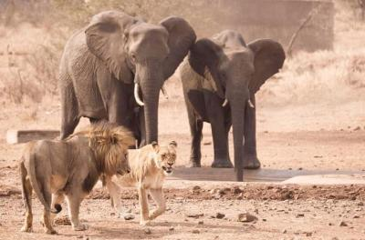 3 Days Guided Kruger National Park Safari from Johannesburg