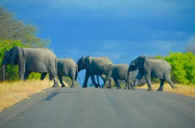 4 Days Kruger National Park Safari and Panorama Route, from Johannesburg