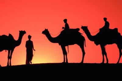 Best Sunset Camel Ride in Palm Grove of Marrakech